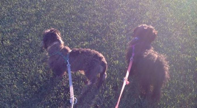 Più conosco gli uomini, più amo i cani., dog sitter a Roma