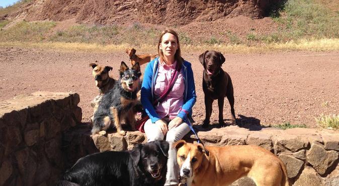 17 års erfarenhet av att jobba med hundar, hundvakt nära Vällingby