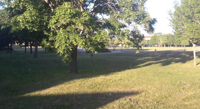 rolig hundpassning på stora gräsplättar, hundvakt nära Uppsala