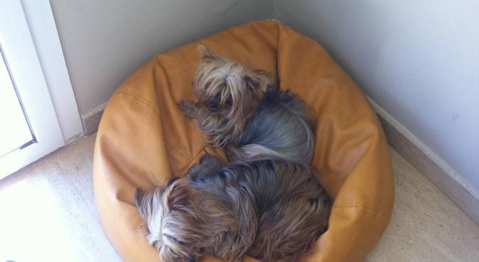 DISFRUTO de los perros y de su compañia, canguro en Valencia