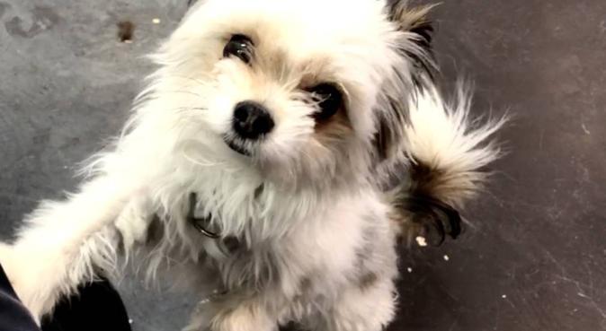 Engagerad & kärleksfull hundpassning i Gävle!, hundvakt nära Gävle