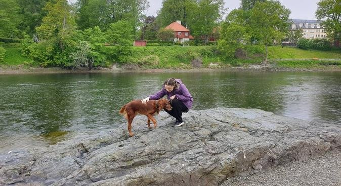 Mastetstudent som trives best med hund!, hundepassere i Trondheim