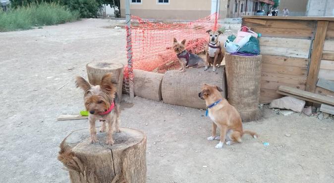 Cuidadora amorosa de los perros, canguro en Murcia, España