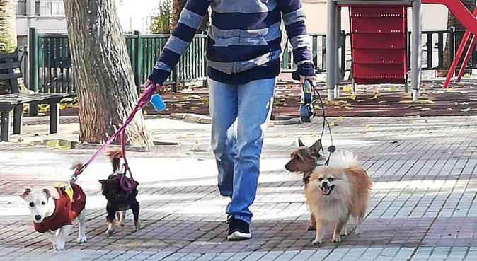 Cuidador de animales, canguro en CACERES