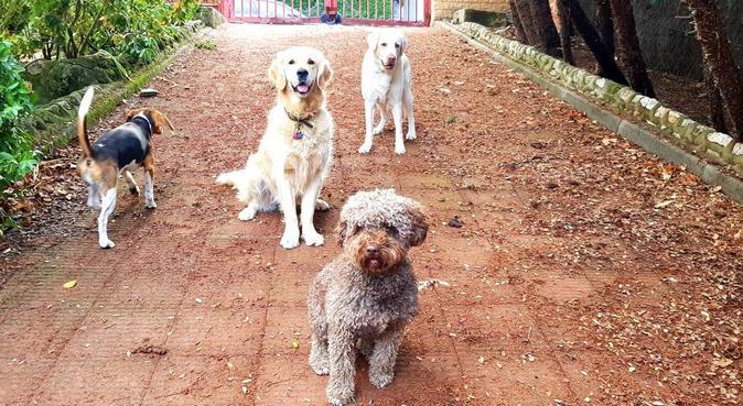 Chalet de campo para perros grandes y pequeños, canguro en Las Rozas