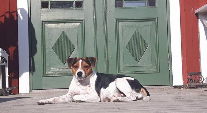 Hundpassning i stort härligt hus i lantlig miljö, hundvakt nära Strängnäs