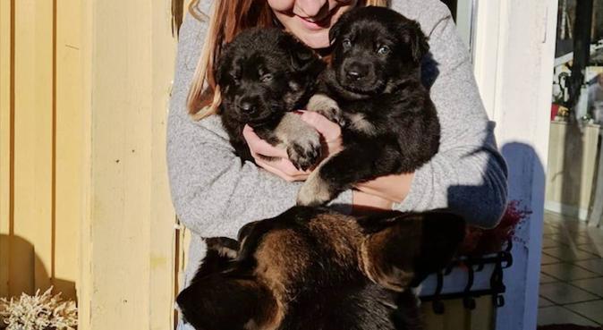 Kärleksfull & trygg hundpassning i alla storlekar!, hundvakt nära Göteborg