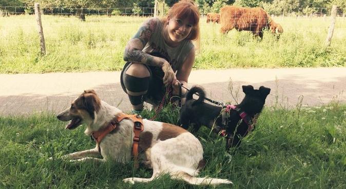 Auslastung & Betreuung mit Spaß &Belohnung, Hundesitter in Berlin