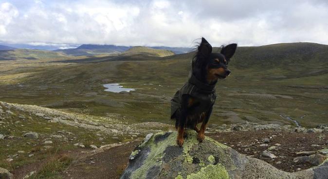 Jeg passer gjerne hunden din! (Carl Berner), hundepassere i Oslo