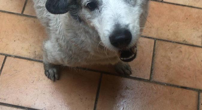 Amore e divertimento a casa di Jude, dog sitter a Napoli, NA, Italia