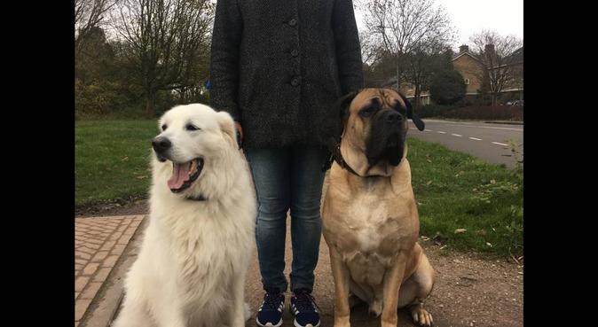 Toegewijde hondenoppas in Groningen!, Hundesitter in Groningen