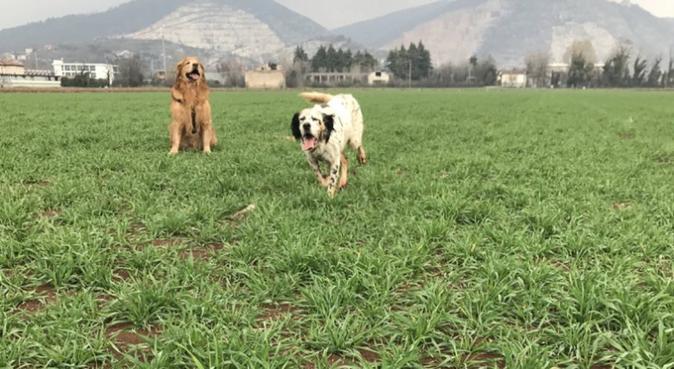 Dritto al cuore del tuo cane ❤️, dog sitter a Brescia, BS, Italia
