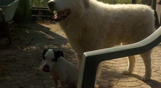 Amici a 4 zampe venite a giocare con noi!!!, dog sitter a Vigodarzere