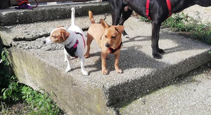 Armonia, serenità tra coccole e lunghe passeggiate, dog sitter a Roma