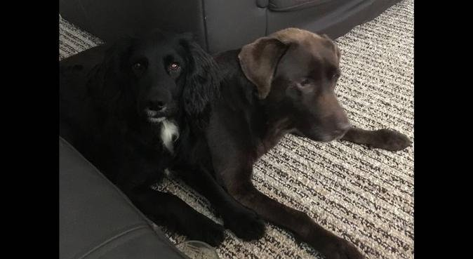Relax knowing your dog is being loved!, dog sitter in Canterbury