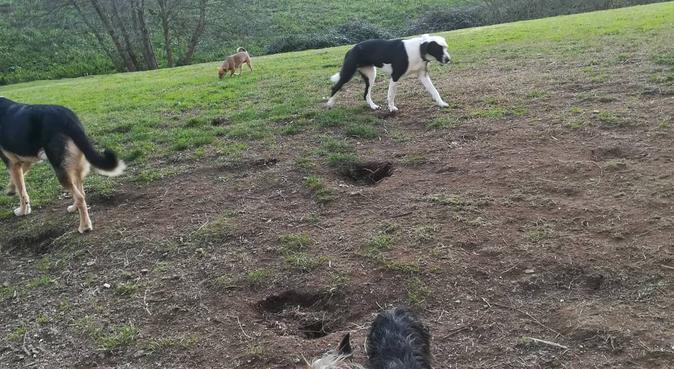 Zona ideal para paseos, canguro en A coruña