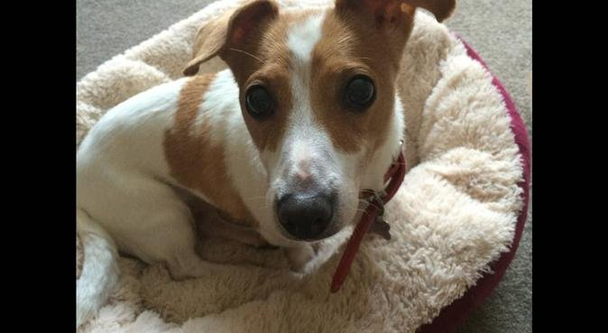 Ready for walkies!, dog sitter in Bradford