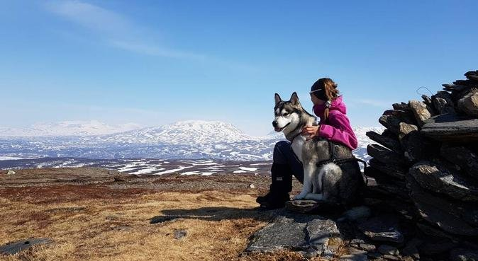 Elsker lange turer i Bymarka og ønsker en turvenn, hundepassere i Trondheim