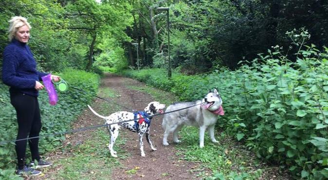 Dog walks, love and Cuddles in Eltham 🐩💞, dog sitter in Eltham