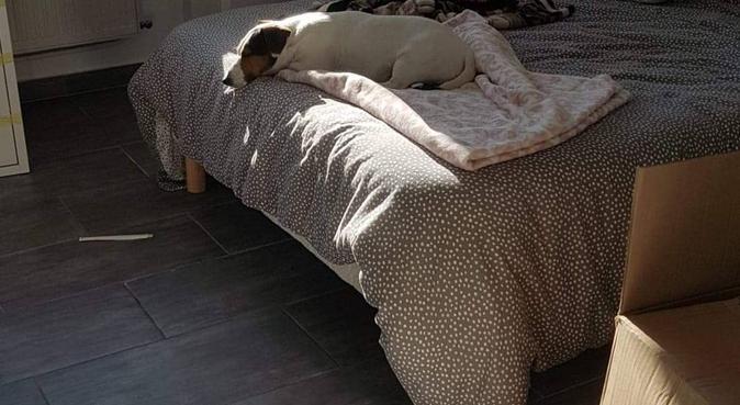 Au paradis des loulous toulonnais, dog sitter à Toulon, France