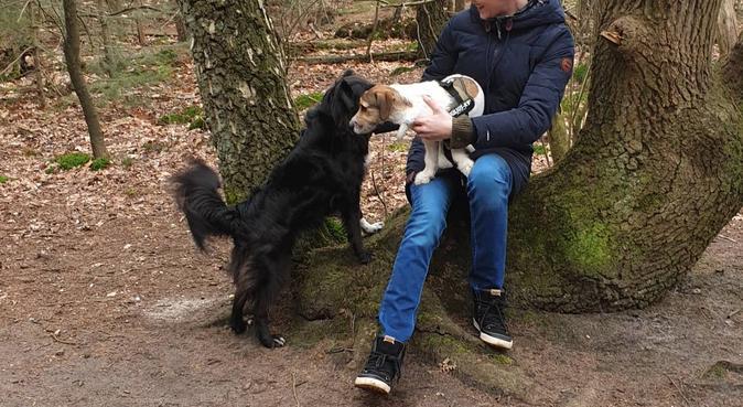 Ervaren,Liefdevolle, flexibele oppas voor uw hond!, hondenoppas in Amstelveen