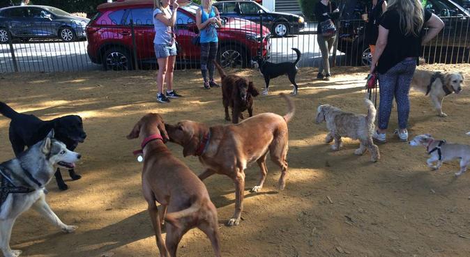 Puppy Retreat, dog sitter in London