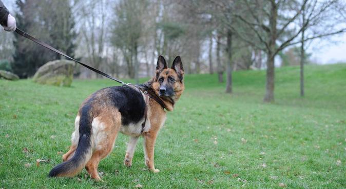 Amie des animaux :), dog sitter à Strasbourg