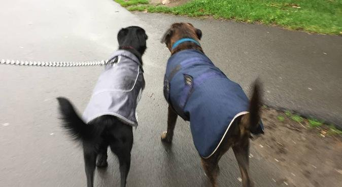 Dog Day Care and Walking, dog sitter in Leeds