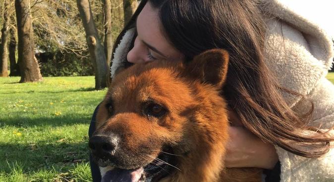 Adoratrice des animaux, dog sitter à Sevrey