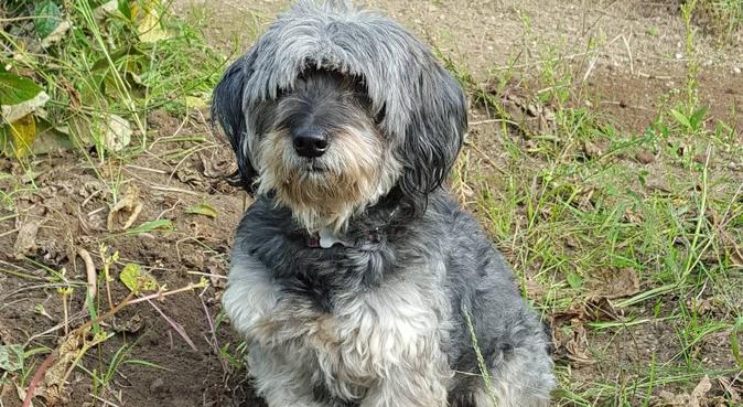 Coin de paradis pour nos vacances, dog sitter à LESCURE D ALBIGEOIS