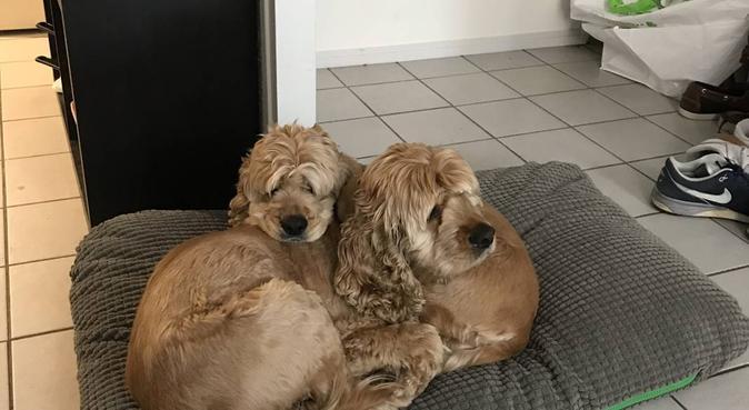 Florette et Louis, deux amoureux des chiens!, dog sitter à Lyon