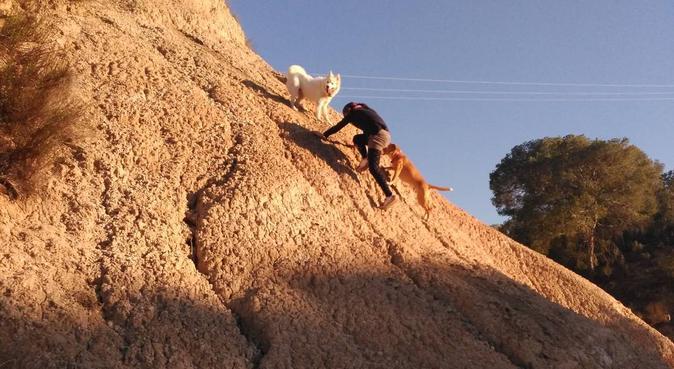 ¡Tú mascota como en casa!, canguro en Molina de Segura