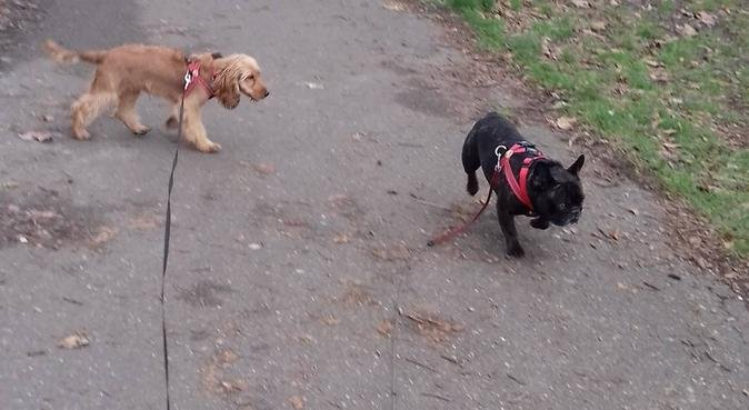 Dog hugs and kisses, dog sitter in tottenham hale