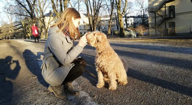 Härlig hundrastning i Vasastan!, hundvakt nära Stockholm