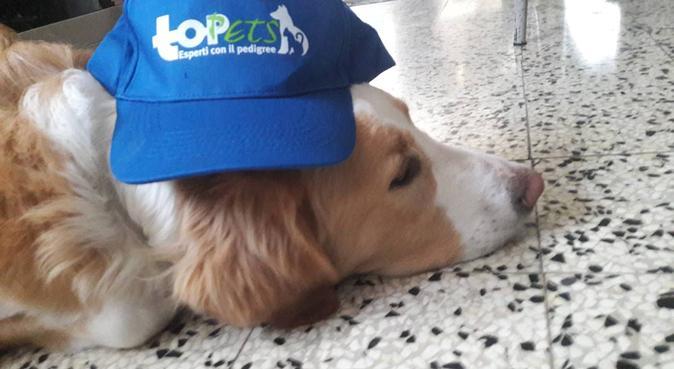 PET sitter è uno stile di vita oltre ad una passi, dog sitter a Genova