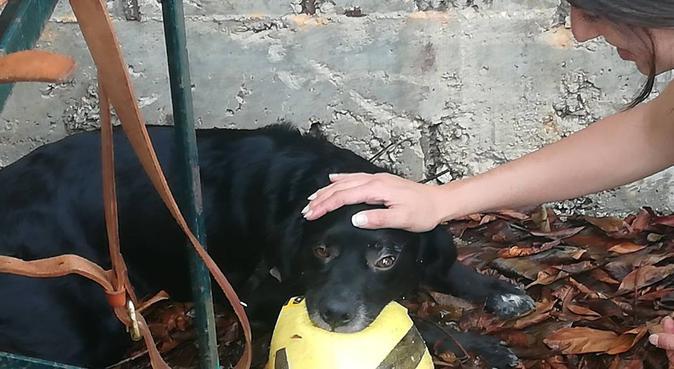 Passeggiate all'aria aperta con un'amica dei cani, dog sitter a Napoli