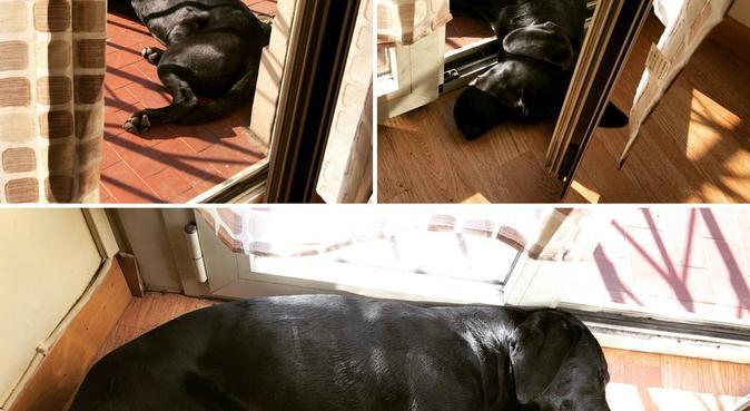 Più che un soggiorno una vera e propria vacanza, dog sitter a Torino