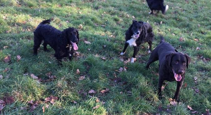 Izzy's Pet Care, dog sitter in Canterbury