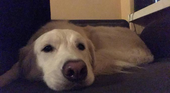 Passeggiate infrasettimanali super divertenti!, dog sitter a Udine, UD, Italia