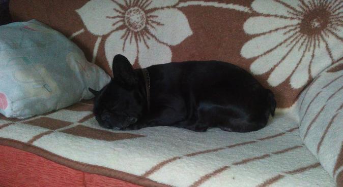Hotel Familiar para Mascotas, dog sitter in Cártama