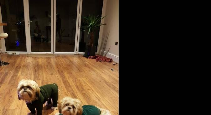 Countryside Retreat, dog sitter in Beacon's Bottom, High Wycombe, UK