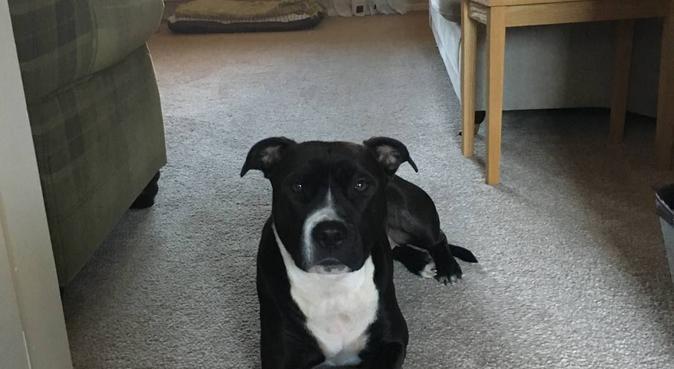 Kims Pawsome Dog Walks, dog sitter in Leicester, UK