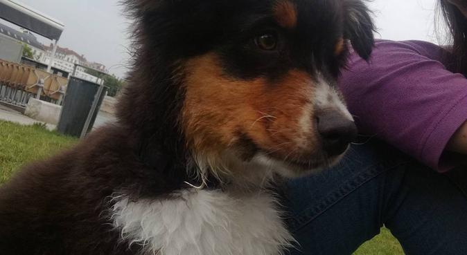 Bienvenue à tous les toutous !, dog sitter à Lyon