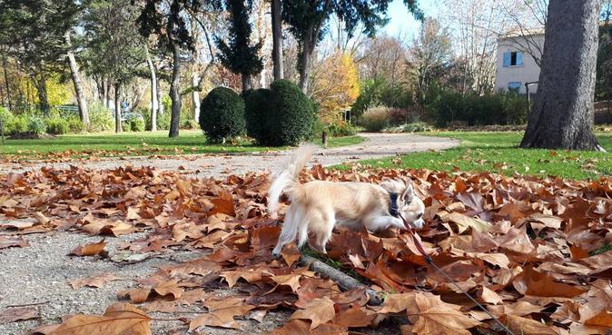Du bonheur avec votre animal :), dog sitter à Aix-en-provence