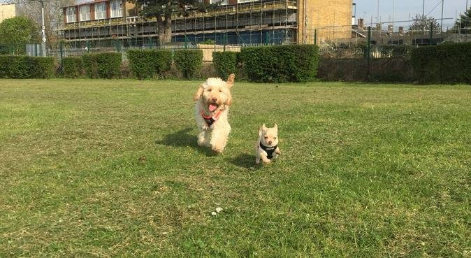 🐾Happy walks uk🐾🍃, dog sitter in Croydon
