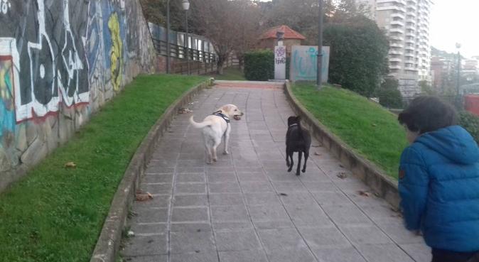 Educadora canina.compañeros perrunos felices, canguro en Santurce
