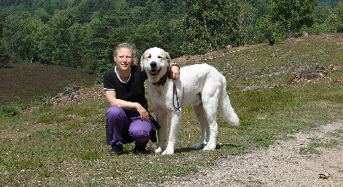 Spiel, Spaß und Spannung für Ihren Hund in Hamburg, Hundesitter in Hamburg