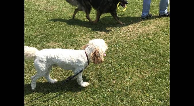 Energetic dog lover in L17 near Sefton Park, dog sitter in Liverpool