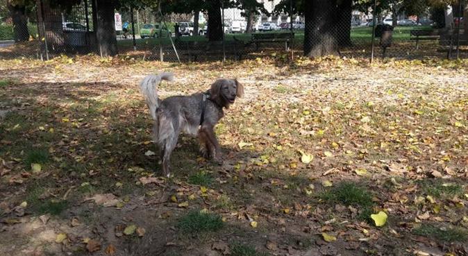 Passeggiate&coccole per gli amici pelosoni ^_^, dog sitter a Bologna
