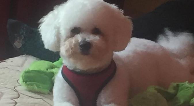 Kingsbury Pet Services, dog sitter in Birmingham